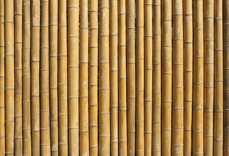 bamboo stick: Bamboo wall