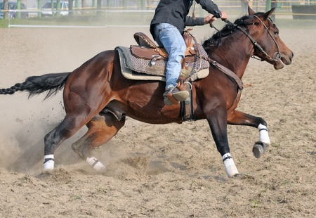 Running horse during a rodeo event Stock Photo