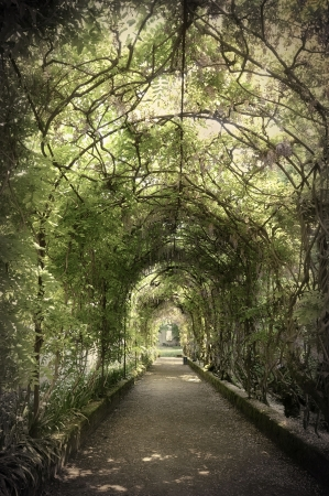 archways: Wisteria tunnel
