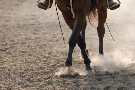 Horse legs in the dust