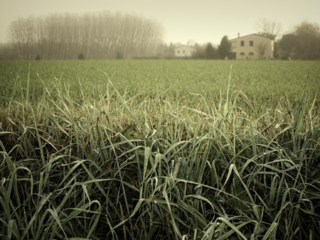 Misty rural landscape photo