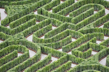 Part of an hedges labyrinth photo