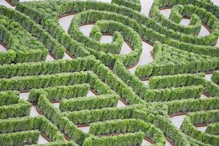 Hedge labyrinth photo