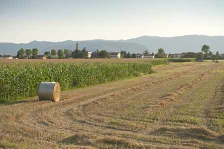 filed: Cultivated fields panorama in North Italy