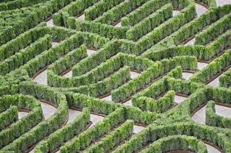Part of an hedges labyrinth viewed from above
