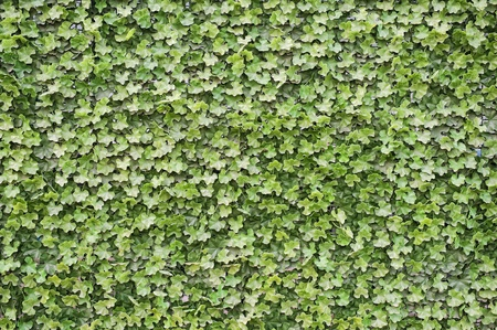 Green leaves plastic ivy background photo