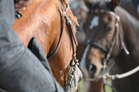 horse harness: Riding a horse
