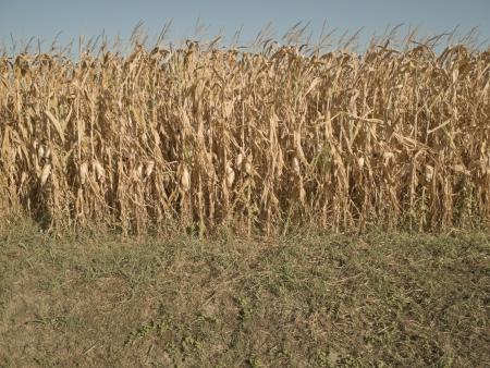 radiacion solar: Estaci�n seca en un campo de ma�z