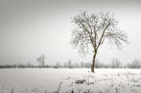 bare trees: Winter countryside