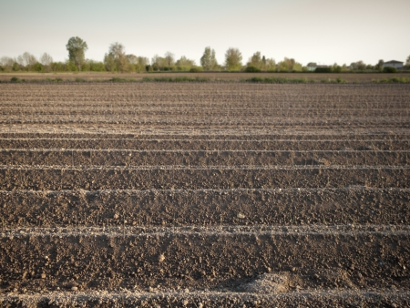 furrow: Young plants in a cultivated field