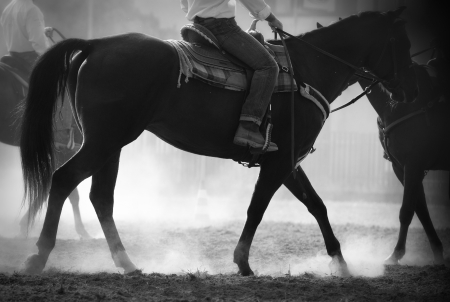 Backlighted horses and riders during a rodeo event  photo