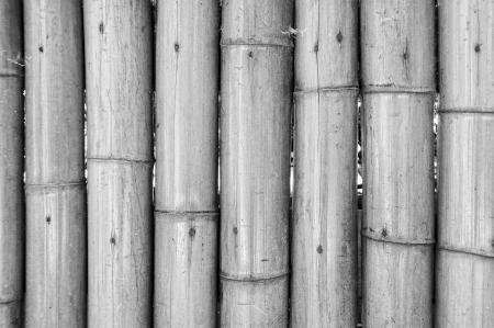 Bamboo pared photo