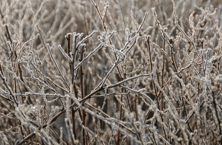 winterly: Ice formations on a dry bush Stock Photo
