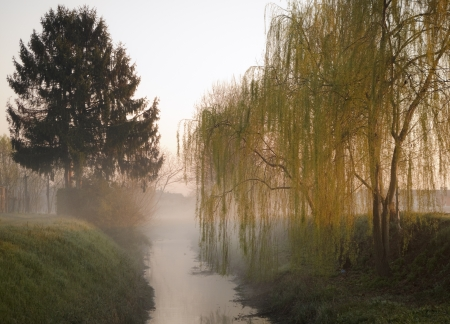 weeping willow: Misty morning along a creek Stock Photo