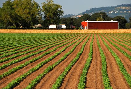 Planted Crops Leading to Red Barn Stock Photo
