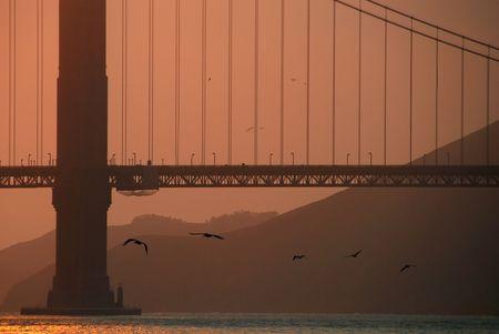 Birds Flying Under Golden Gate Bridge