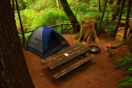 Camping in the Redwoods Stock Photo