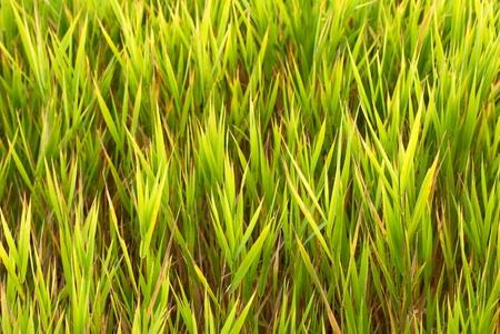 Swamp Plant Background Stock Photo