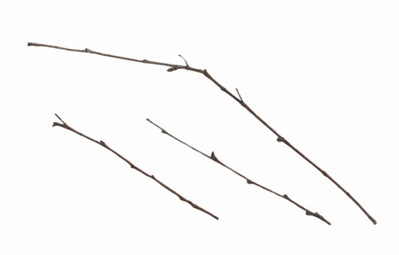 collection of branches photo