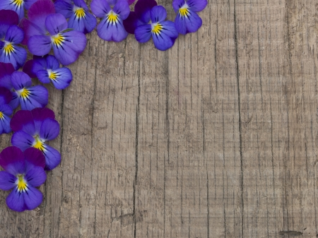 fresh violets on the wooden background