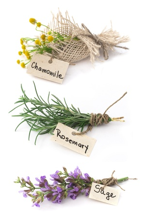 chamomile, rosemary and sage photo