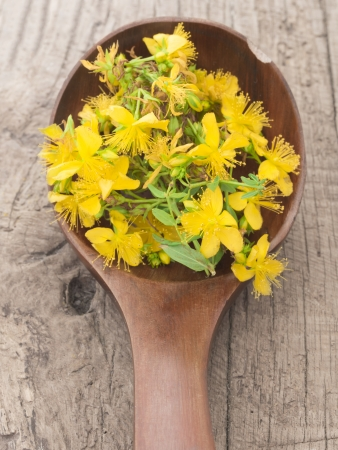 st  john: st john s wort Stock Photo