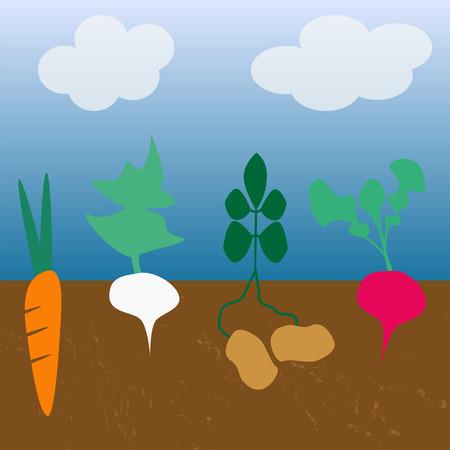 old fashioned vegetables: root vegetables