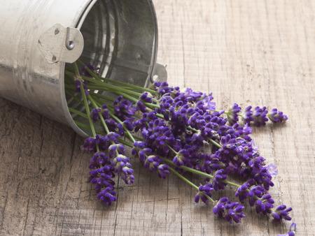 lavender flowers Zdjęcie Seryjne