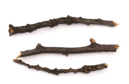 wooden branches isolated on the white background photo