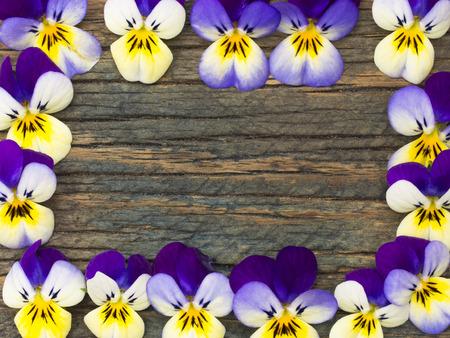 violets: beautiful violets frame