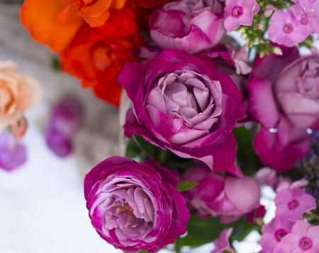 beautiful roses background Stock Photo
