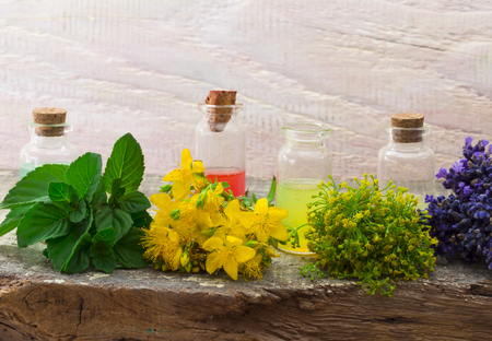 fresh dil, mint, lavender and St Johns wort Stok Fotoğraf