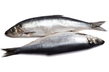 Two Salted herring on white background closeup photo