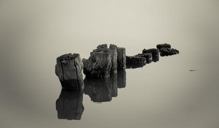 tree trunks floating in the lake Stok Fotoğraf