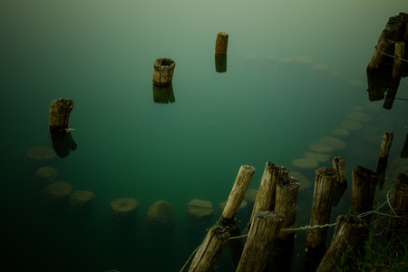 tree trunks floating in the lake Banque d'images