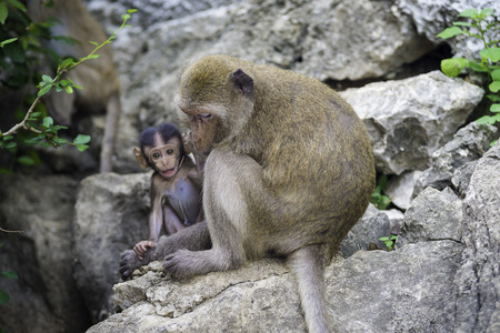 monkies: Monkey