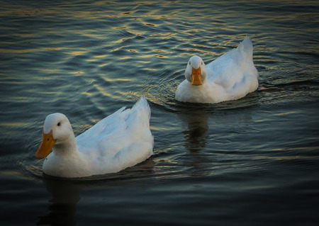 Beautiful swimming