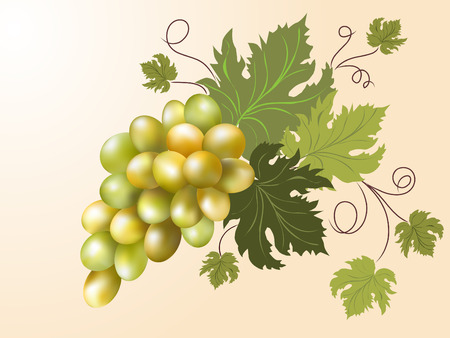 White grapes on the pink background     Vector
