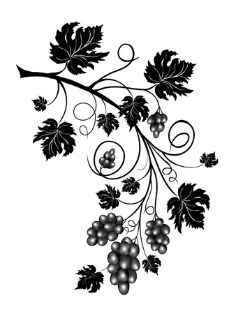 bunch of grapes: Grapevine with scrolls and leaves Illustration