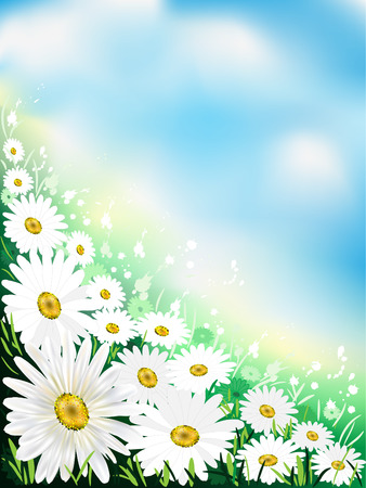 Flower background with daisies and leaves.
