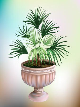 Palma in a stone vase.