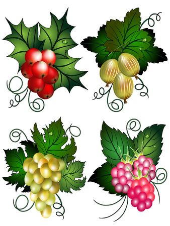Set of the berries with raspberries, grapes, gooseberry and Mistle. 스톡 콘텐츠