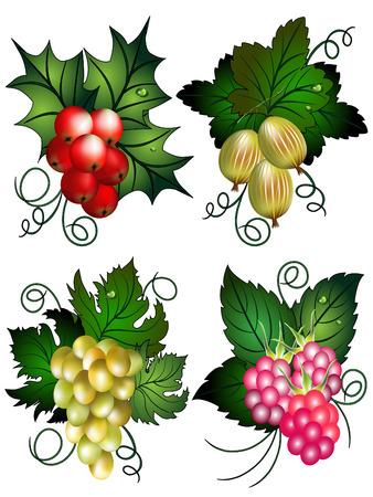 Set of the berries with raspberries, grapes, gooseberry and Mistle. Ilustração