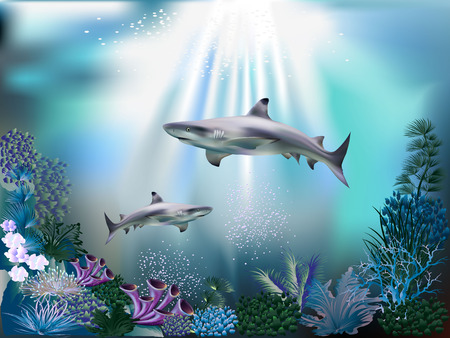 The underwater world with sharks and plants