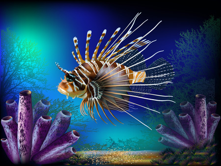 nature backgrounds: The underwater world with fish and plants
