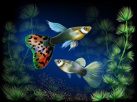 algas marinas: El mundo submarino con peces y plantas Vectores