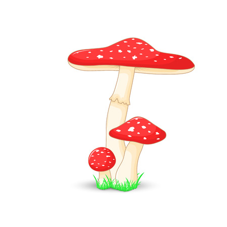 fly agaric: mushroom amanita muscaria surround isolated on white background with grass.