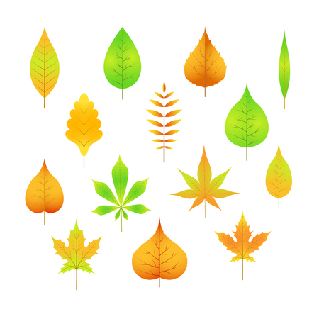 autumn leaves on a white isolated background cartoon style in vector EPS 10.
