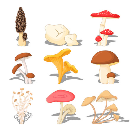 set of edible mushrooms with shadow, three-dimensional on white background.