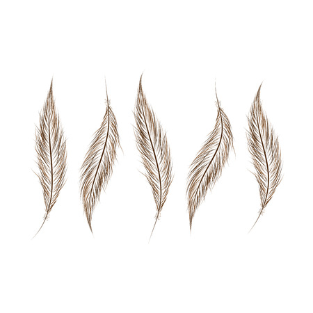 ensemble de plumes sont dessinés à la main sur un fond blanc.